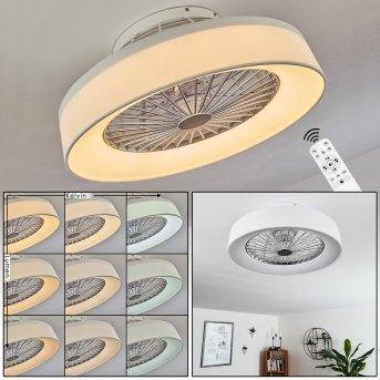 Moli ceiling fan LED white, 1-light source, Remote control
