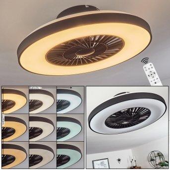 Qualiano ceiling fan LED black, white, 1-light source, Remote control