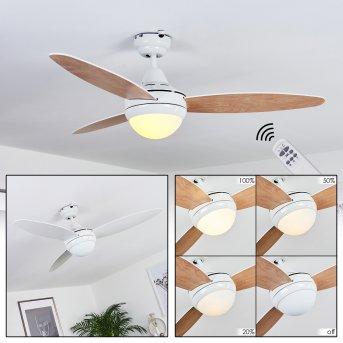 Beltiglio ceiling fan white, Dark wood, 2-light sources, Remote control