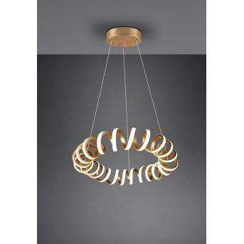 Trio CURL Pendant Light LED gold, 1-light source
